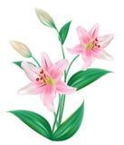 Geïsoleerdei de Bloem van Lilly vector illustratie