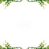 Geïsoleerdek de bladeren van de klimop vector illustratie