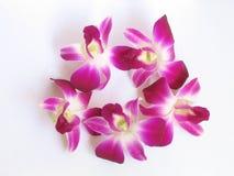 Geïsoleerdek orchidee Stock Foto's