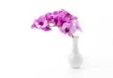 Geïsoleerdek orchidee Stock Foto