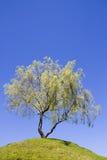 Geïsoleerdel boom op een heuvel Royalty-vrije Stock Afbeeldingen