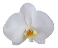 Geïsoleerdel de bloem van de orchidee stock foto