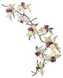 Geïsoleerdel de tak van de orchidee Stock Afbeelding