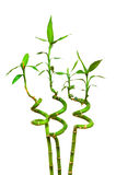 Geïsoleerdel de takken van het bamboe Royalty-vrije Stock Afbeeldingen