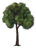 Geïsoleerdel Groene Boom - het Digitale Schilderen Stock Fotografie