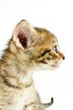 Geïsoleerdel kat op witte achtergrond royalty-vrije stock foto's