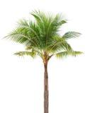 Geïsoleerdem enige kokospalm Stock Foto