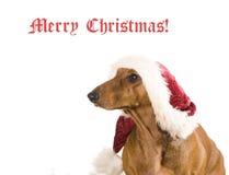 Geïsoleerden de hond van Kerstmis Stock Afbeeldingen