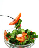 Geïsoleerden de salade van de lente Royalty-vrije Stock Afbeelding