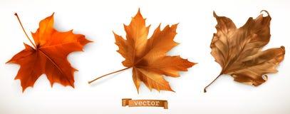 Geïsoleerden het blad van de esdoorn 3D Vectorpictogrammen stock illustratie