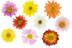 Geïsoleerdeo bloemen Royalty-vrije Stock Afbeeldingen