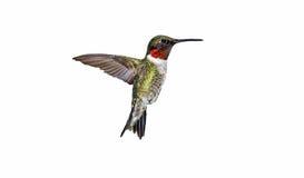GeïsoleerdeO kolibrie Stock Fotografie