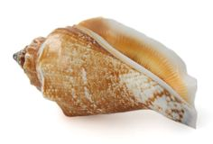 Geïsoleerdeo overzeese shell Stock Afbeeldingen