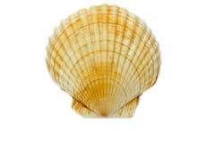 Geïsoleerdeo shell Stock Afbeelding