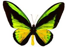 Geïsoleerdeo vlinder Royalty-vrije Stock Fotografie