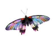 Geïsoleerdeo vlinder Royalty-vrije Stock Afbeelding