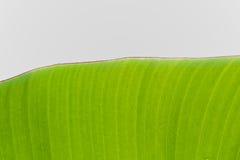 Geïsoleerdep het blad van de banaan Royalty-vrije Stock Foto