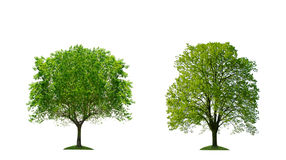 Geïsoleerder bomen Royalty-vrije Stock Foto's