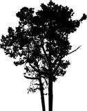 Geïsoleerder boom - 9. Silhouet Stock Afbeelding