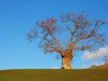 Geïsoleerder boom dichtbij Ambleside Royalty-vrije Stock Afbeelding