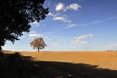 Geïsoleerder boom in het Toscaanse platteland stock fotografie