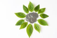 Geïsoleerder de bloemvorm van muntstukken en van installatiebladeren Royalty-vrije Stock Foto's