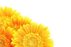 Geïsoleerder de hoek van bloemen royalty-vrije stock afbeeldingen