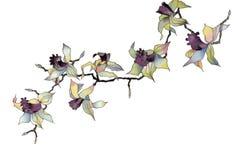 GeïsoleerdeR de tak van de orchidee Royalty-vrije Stock Afbeeldingen