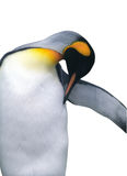 Geïsoleerder keizerpinguïn met het knippen van weg Royalty-vrije Stock Afbeelding