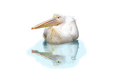 Geïsoleerder pelikaan Royalty-vrije Stock Afbeelding