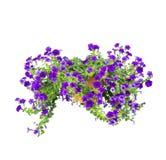 Geïsoleerder petunia Royalty-vrije Stock Afbeeldingen