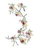 Geïsoleerdes de tak van de orchidee Royalty-vrije Stock Fotografie