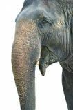 Geïsoleerdes olifant Royalty-vrije Stock Afbeeldingen