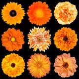 Geïsoleerdes selectie van Diverse Oranje Bloemen royalty-vrije stock afbeelding