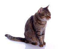Geïsoleerdet kat Stock Afbeelding