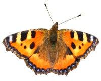 Geïsoleerdet oranje vlinder Stock Foto