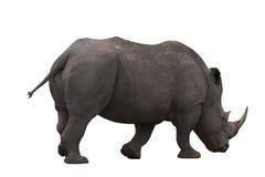 Geïsoleerdet rinoceros Stock Foto