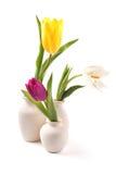 Geïsoleerdet tulpen stock afbeeldingen