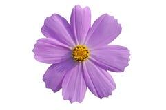 Geïsoleerdeu bloem met weg Royalty-vrije Stock Afbeeldingen
