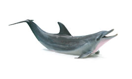 Geïsoleerdeu dolfijn royalty-vrije stock foto