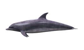 Geïsoleerdeu dolfijn stock illustratie