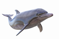 Geïsoleerdeu dolfijn royalty-vrije stock afbeelding