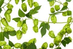 Geïsoleerdeu hop Stock Foto's