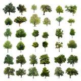 Geïsoleerdev bomen Stock Afbeeldingen
