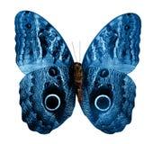 Geïsoleerdev vlinder Stock Fotografie