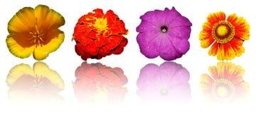 Geïsoleerdew bloemen royalty-vrije stock foto