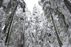 Geïsoleerdew boom die door sneeuw tegen hemel wordt behandeld Royalty-vrije Stock Afbeeldingen