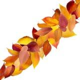 Geïsoleerdew de herfstbladeren Royalty-vrije Stock Foto's