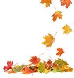 Geïsoleerdew de herfstbladeren Stock Foto