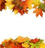 Geïsoleerdew de herfstbladeren Royalty-vrije Stock Foto